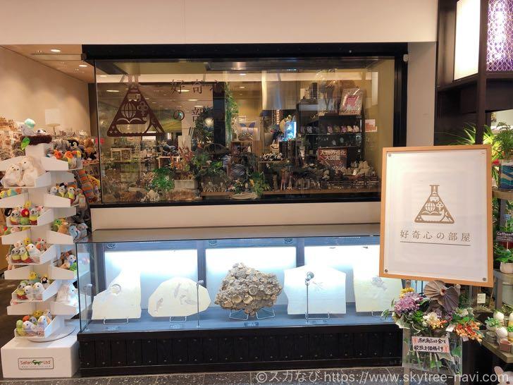 【開店】「好奇心の部屋」がソラマチ1Fのソラマチ商店街に11月3日(土)から期間限定でオープン