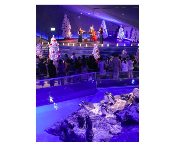 すみだ水族館のクリスマス