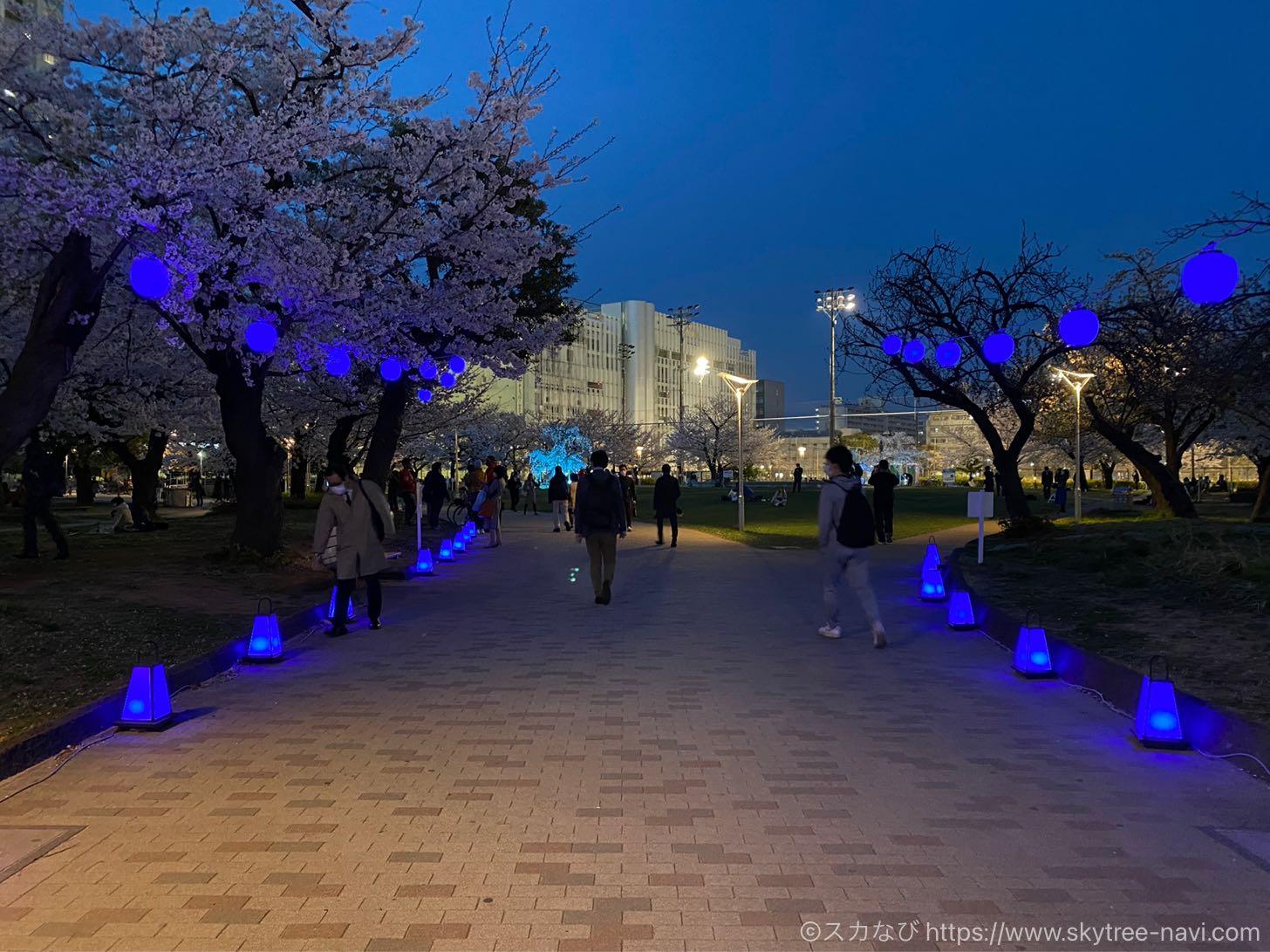 錦糸公園の桜ライトアップ